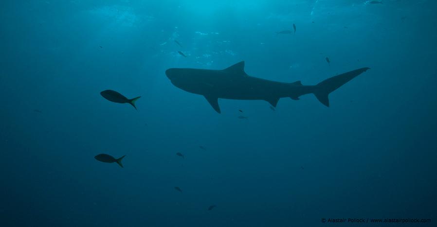 Liberia steps up to protect sharks and rays