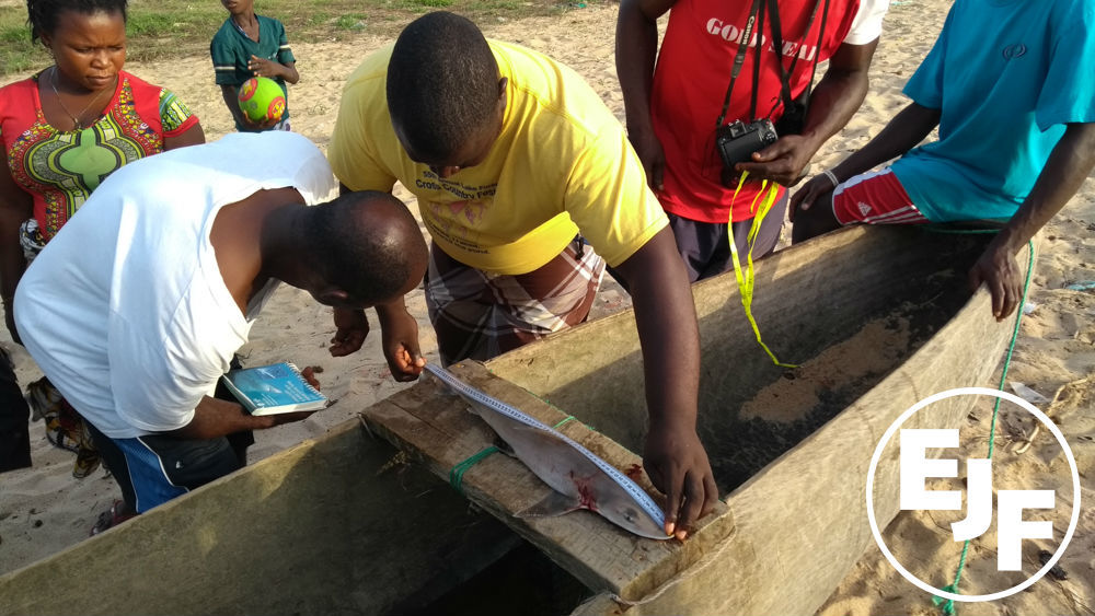 Citizen scientists from Liberian fishing communities work to protect sharks and rays