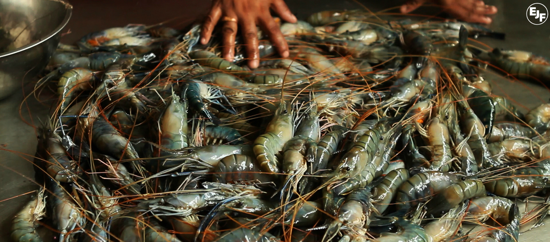 Where does your shrimp come from?