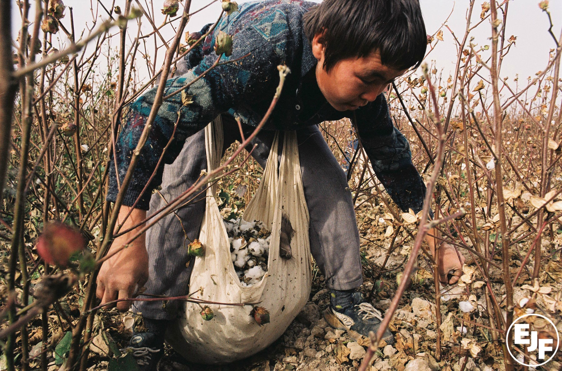 EJF invited by UK Government to discuss Uzbek cotton