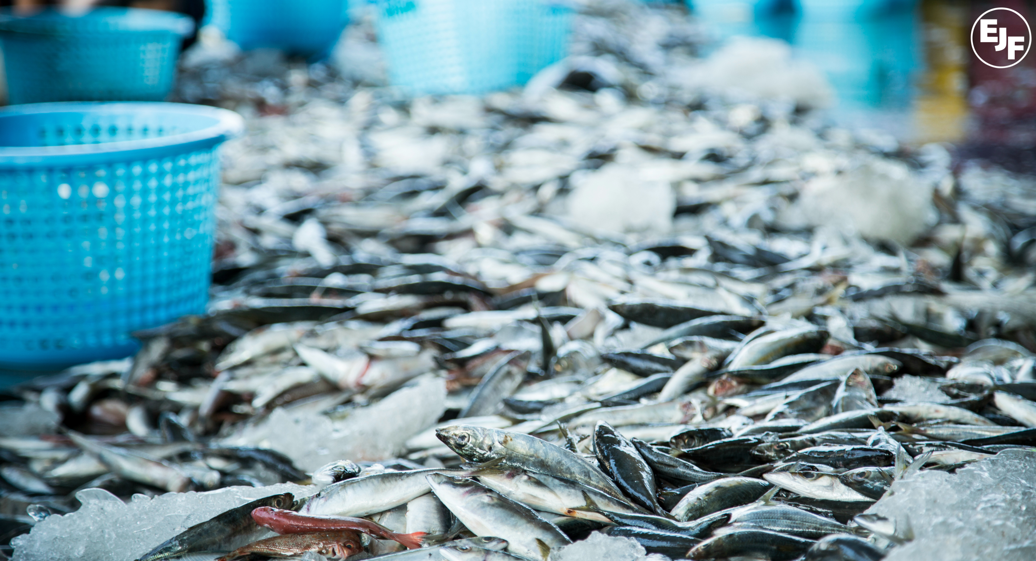 EU to ban fish imports from Sri Lanka for illegal fishing