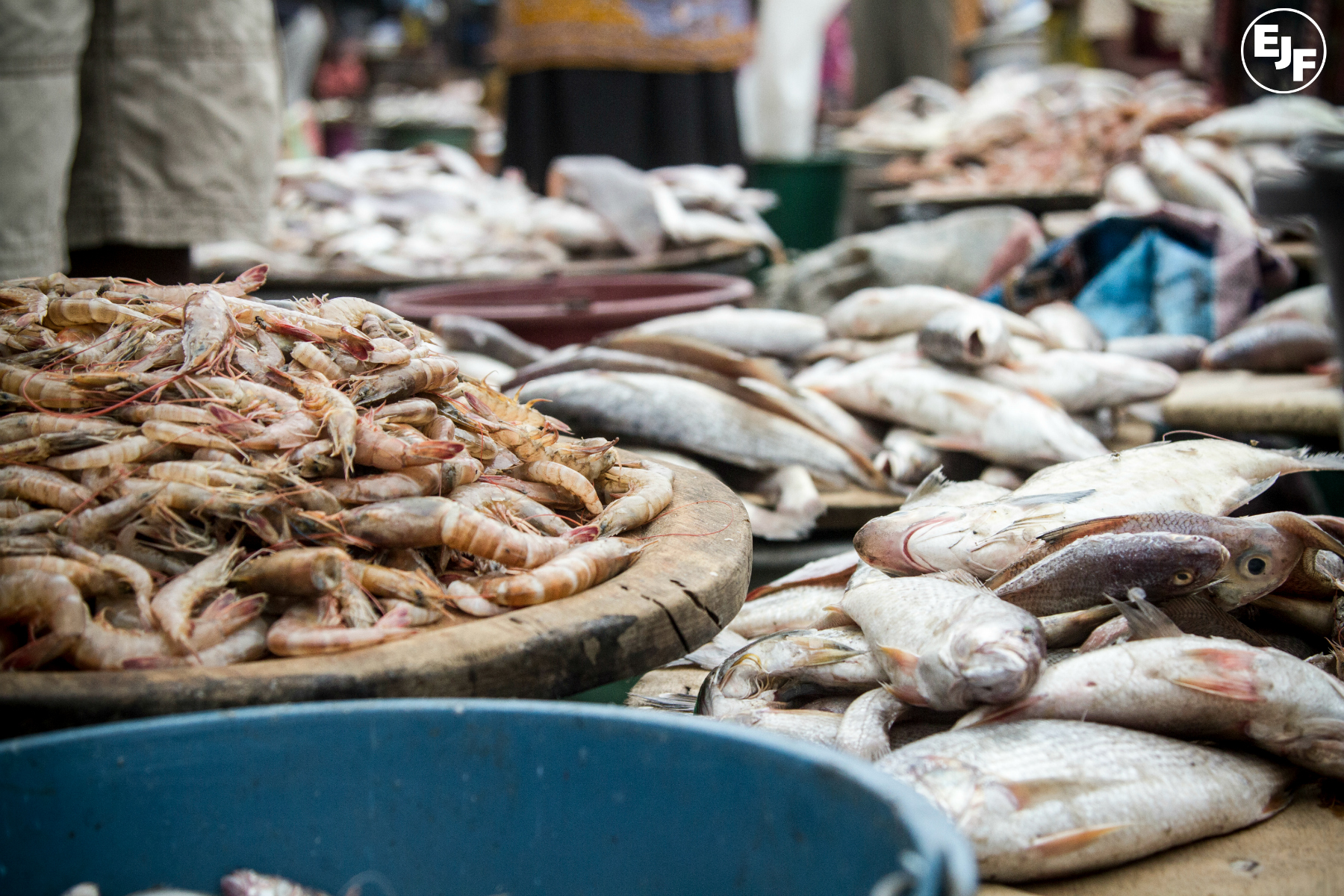 Leading businesses, NGOs and experts identify solutions to secure global seafood supplies