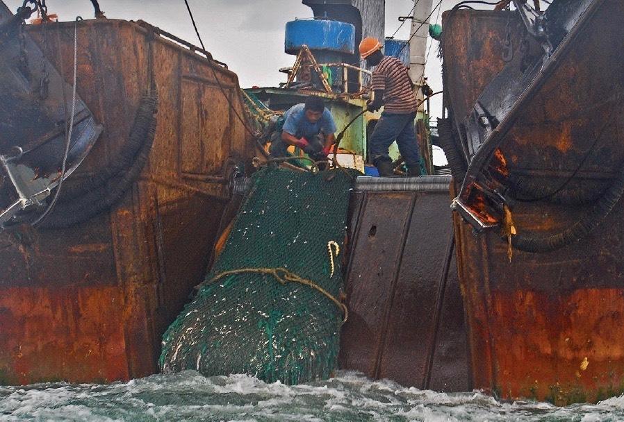 Risikoprüfung von Fischerei-Lieferketten: Ratgeber veröffentlicht