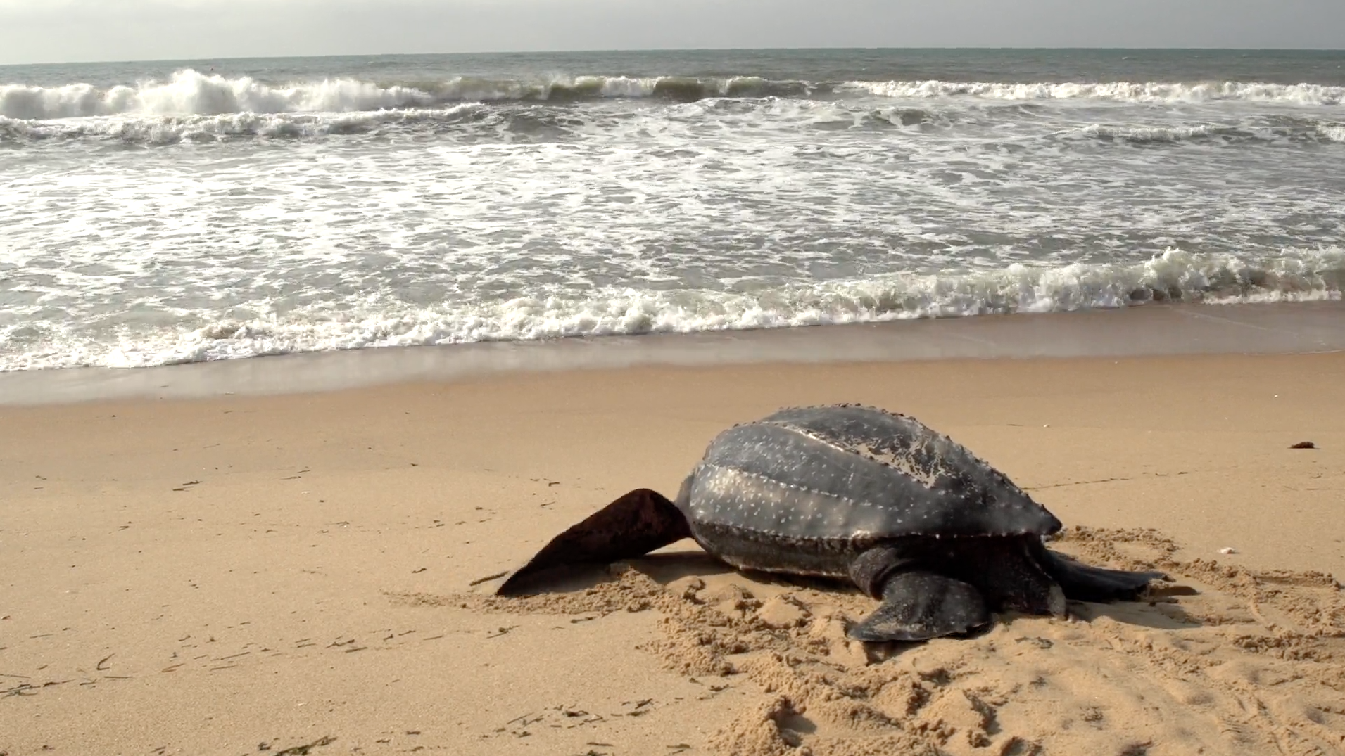 Protecting Turtles in Liberia