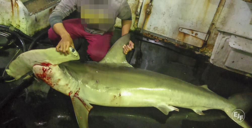 Shark-Taiwan.jpg#asset:4244