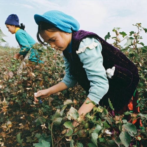 Tesco takes a stand against forced labour in Uzbek cotton harvest