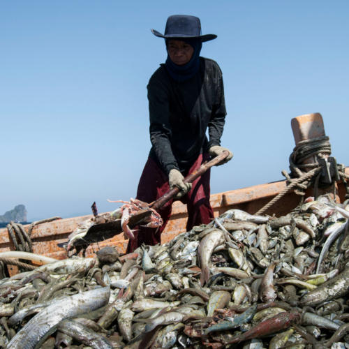 EJF presents updates on anti-slavery work at seafood ethics event