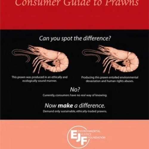 EJF Consumer Guide to Prawns