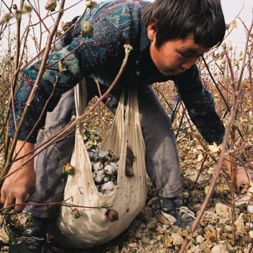 White gold - the true cost of cotton