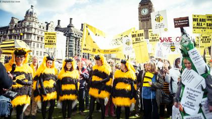 Bee Coalition questions strength of UK National Pollinator Strategy