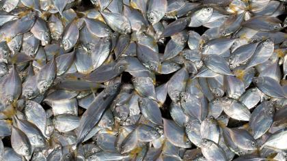 European Fish Dependence Day: Europe runs out of fish