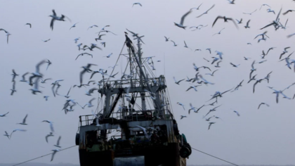 Eradicating illegal fishing and improving transparency in Regional Fisheries Management Organisations