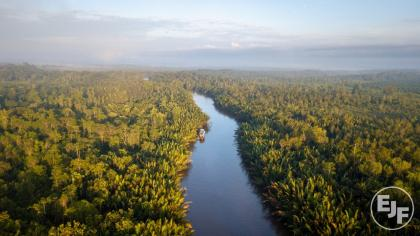 RED herring: Can the revised EU Renewable Energy Directive save the world's forests?