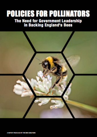 Policies for Pollinators: The Need for Government Leadership in Backing England's Bees