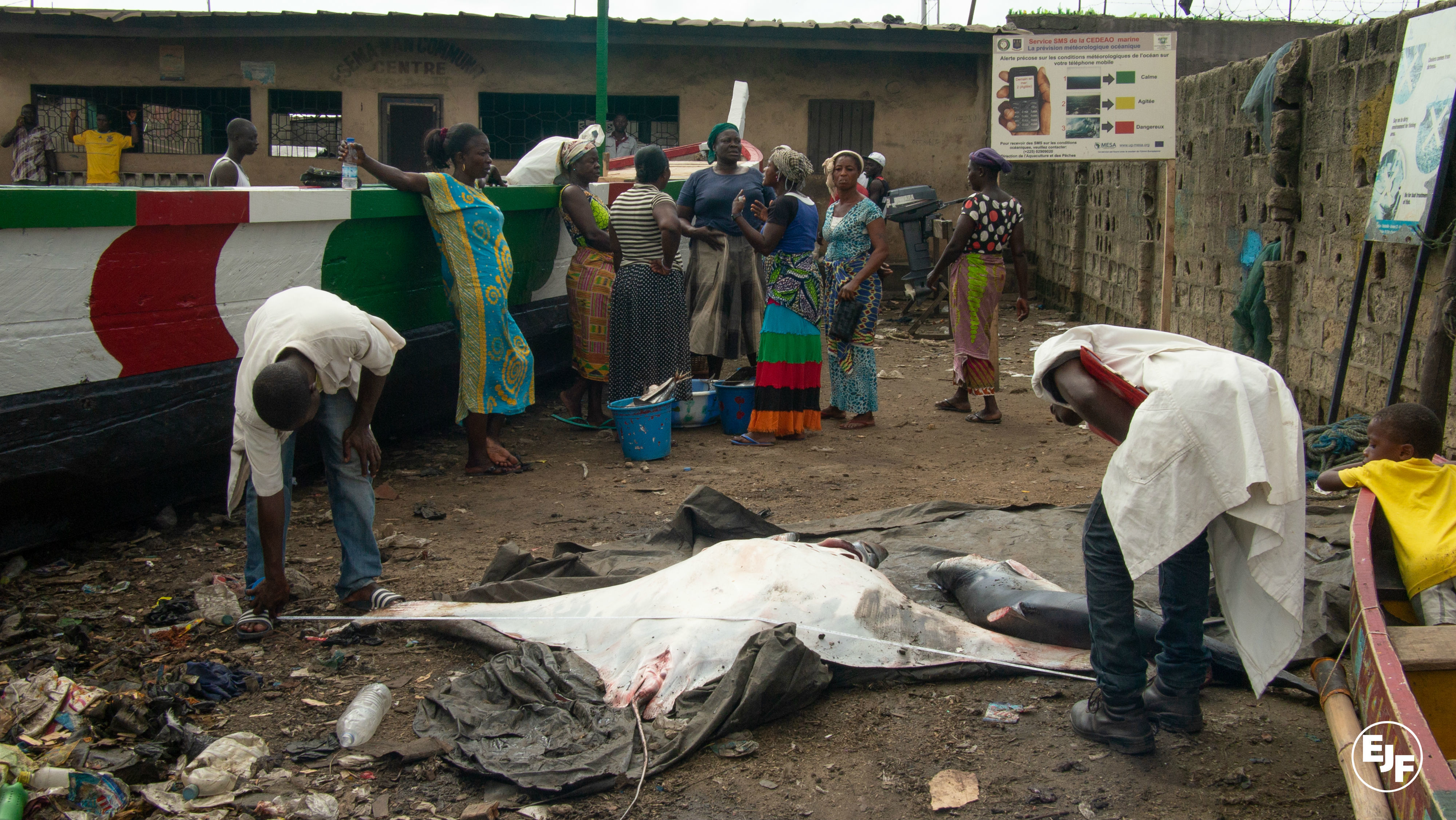 New project to sustainably manage sharks and rays in the Ivory coast