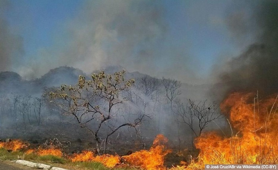 Blood and Fire: The burning Amazon is a call for us all to act