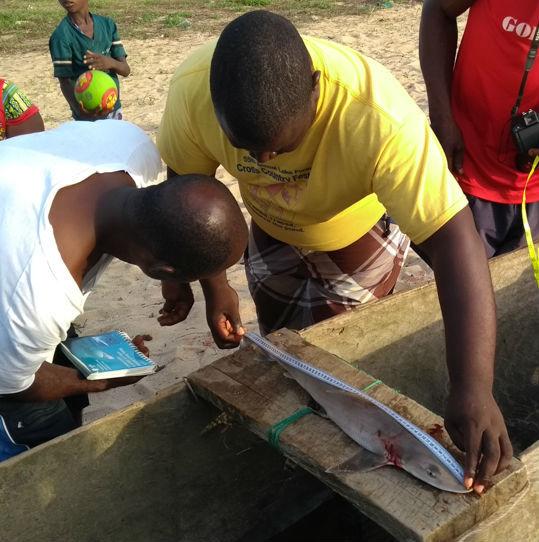 Training Liberia Shark Data