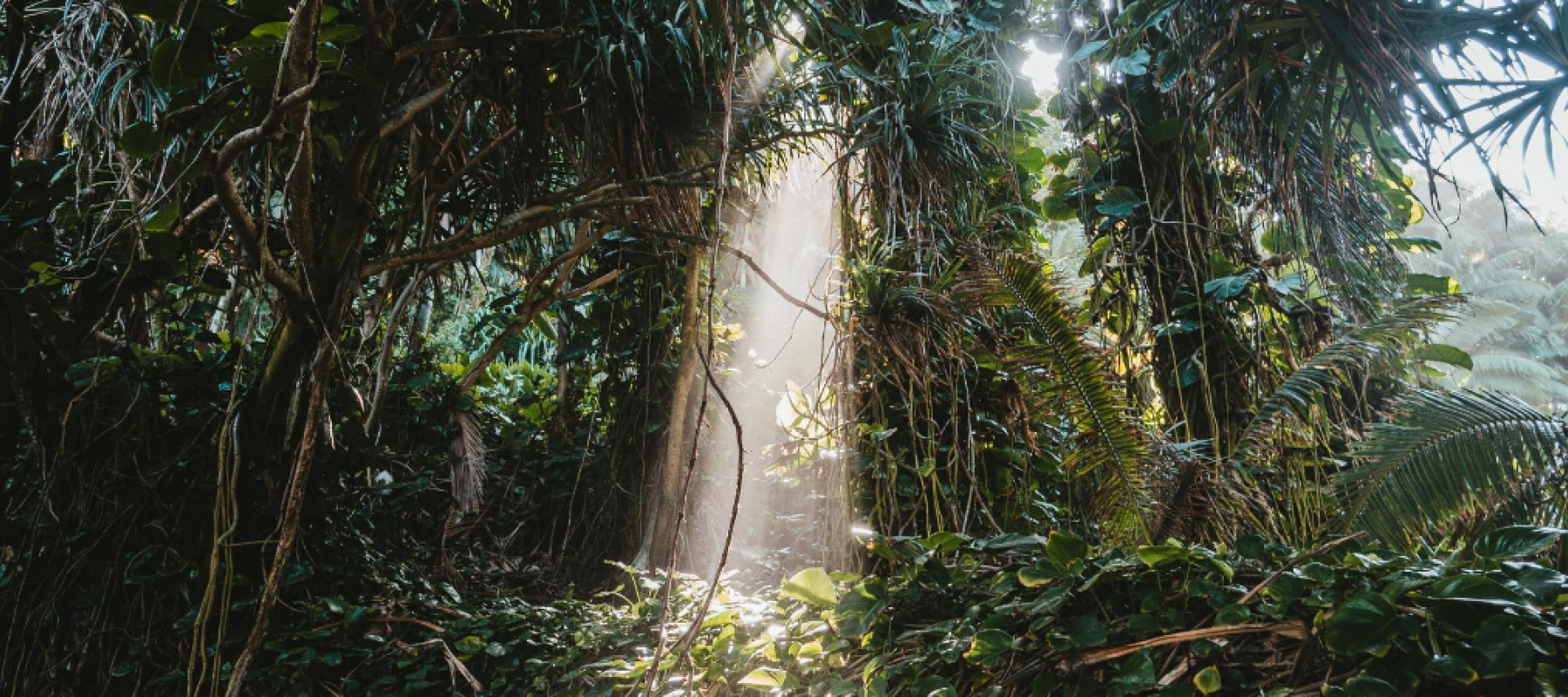 Rainforest and sunlight