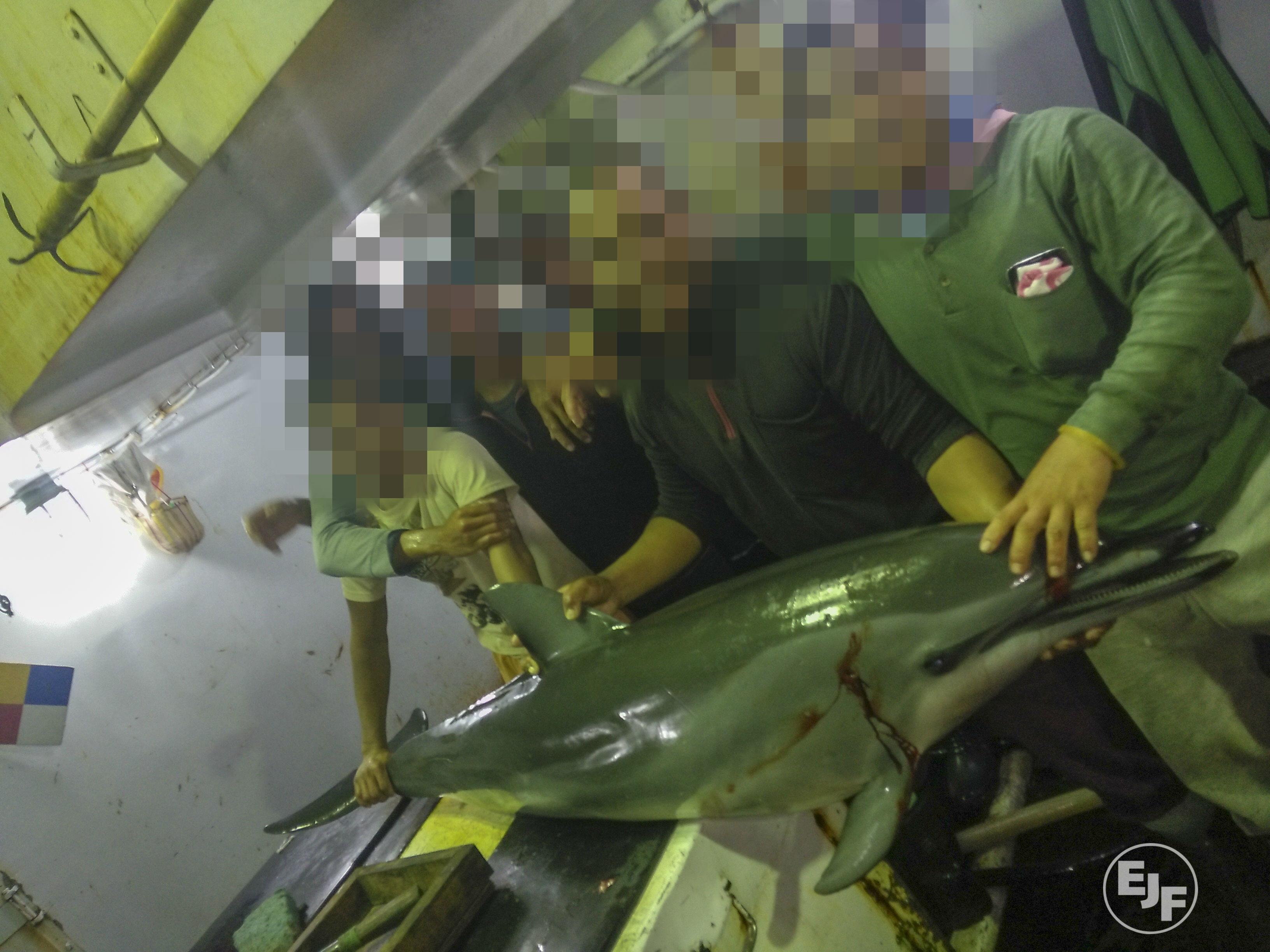 EJF 再揭台灣漁船非法割鰭棄身、捕殺海豚及海龜,引起國際社會關注