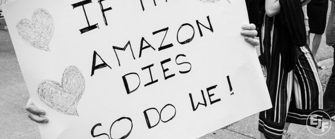 Brasiliens Regenwald brennt: Was Du jetzt tun kannst