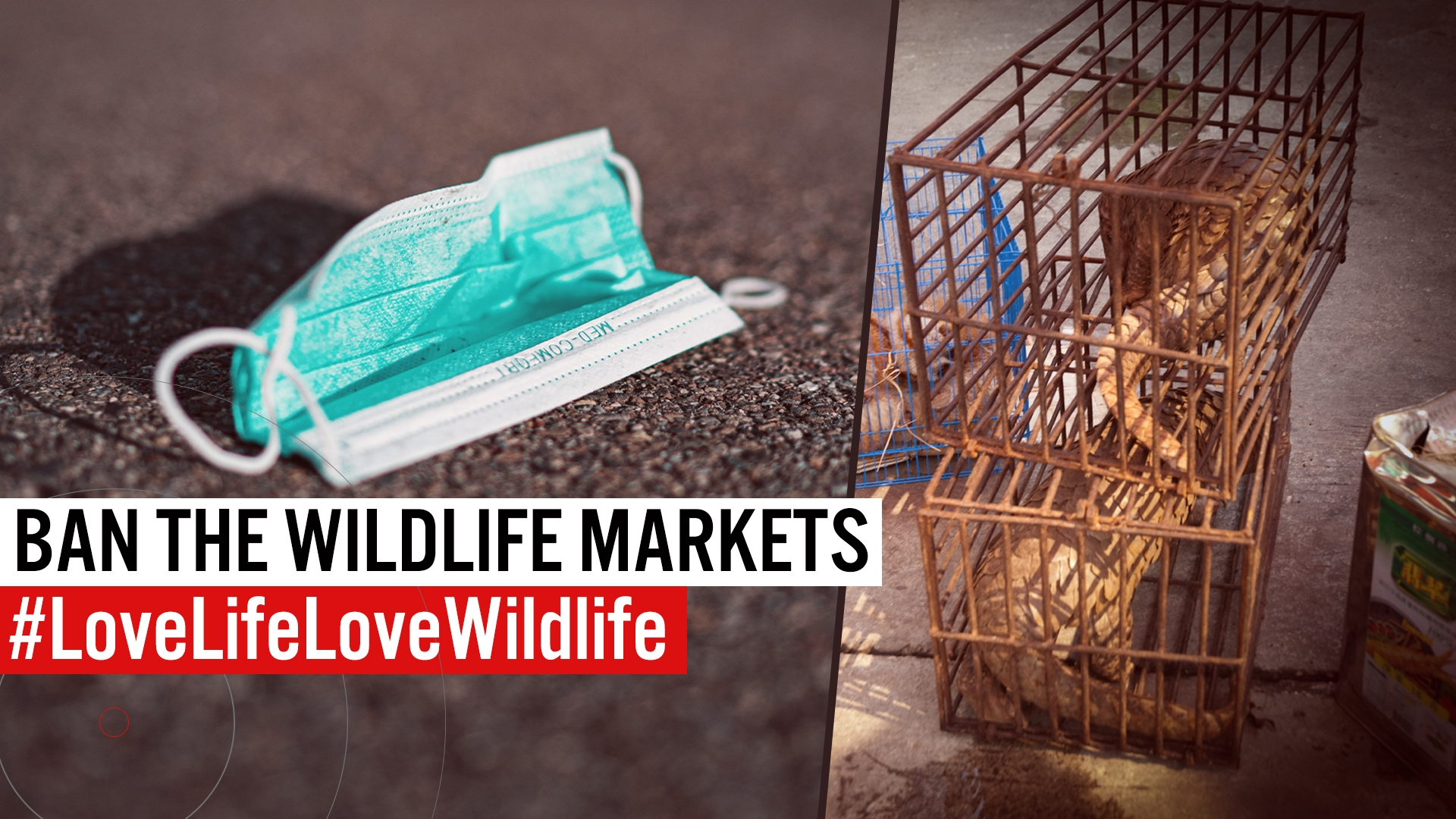 Ban Commercial wildlife markets