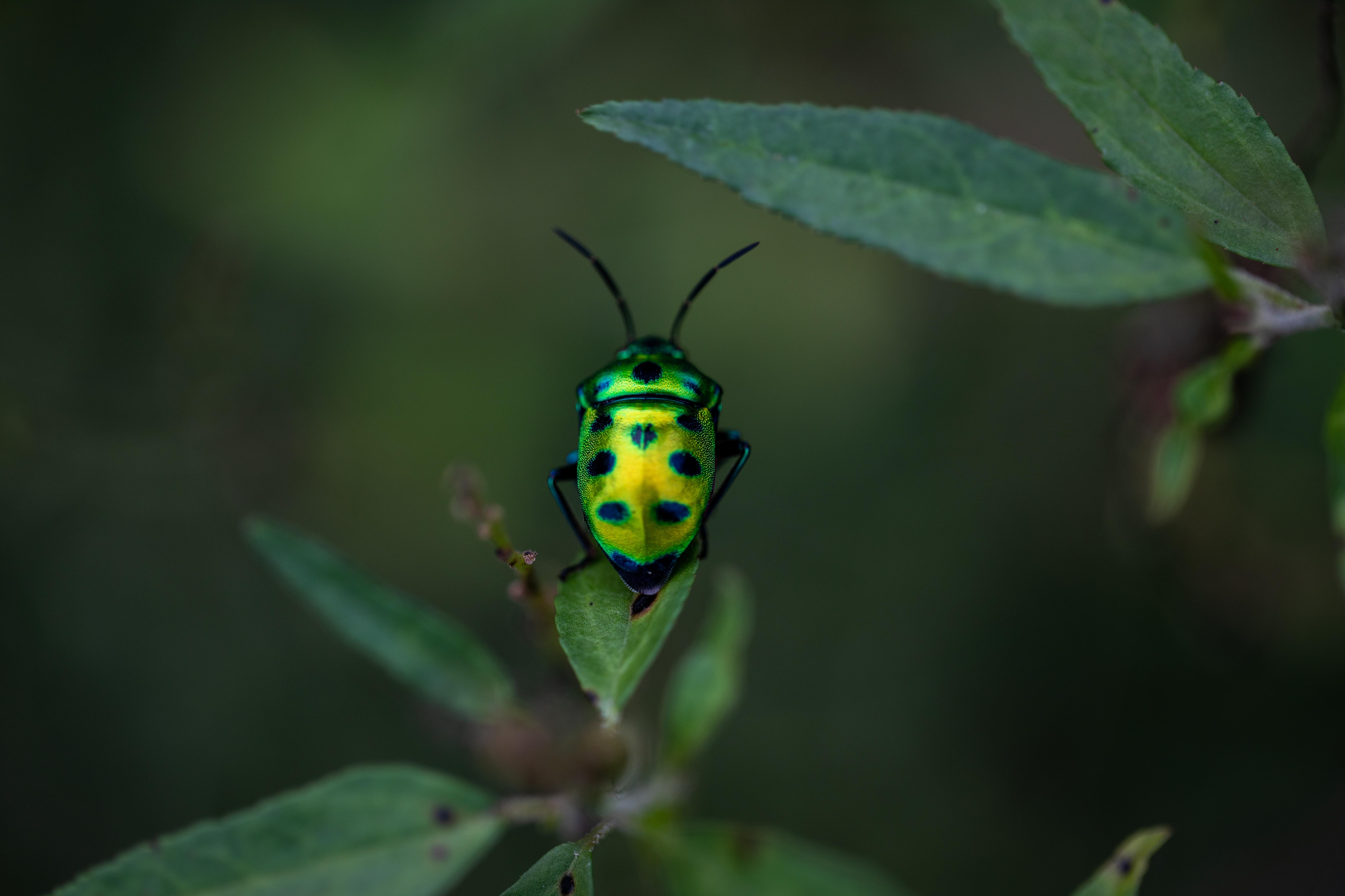Biodiversity loss is not just an 'environmental' problem - Treasury
