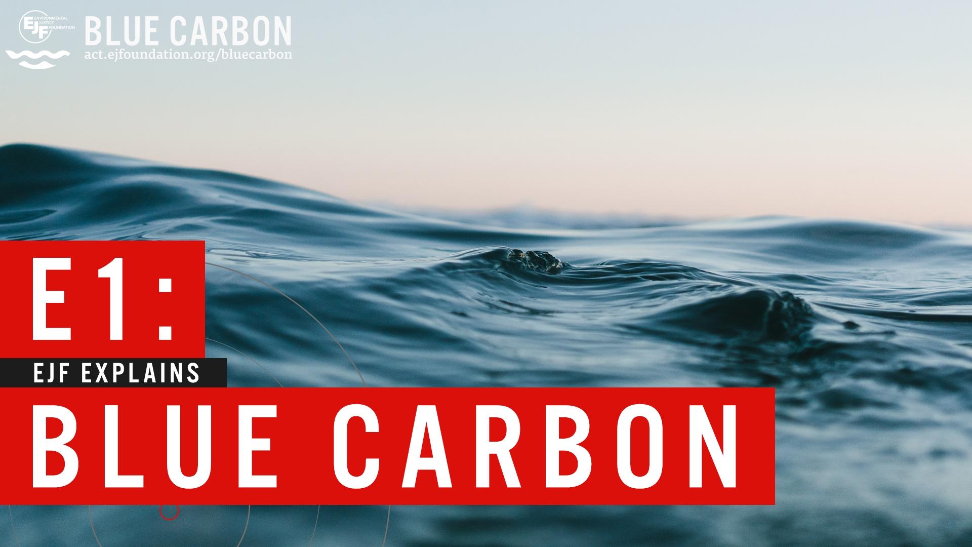 Blue carbon | Explainer