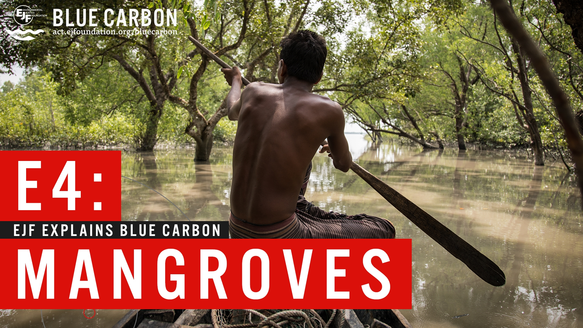 Blue carbon   Mangroves