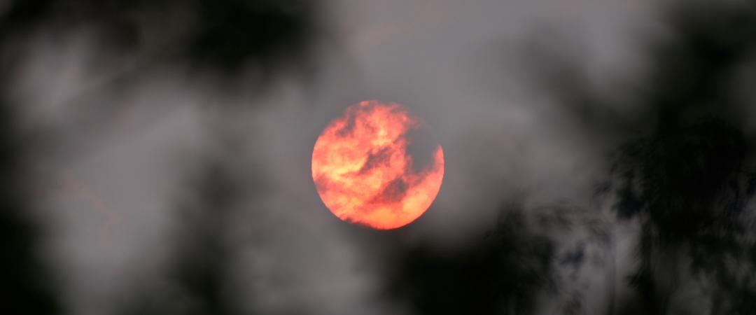 Buschbrände in Australien: Die richtige Antwort