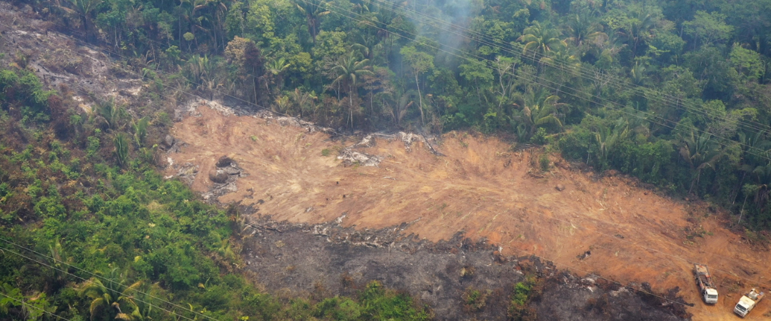 Deutschland: EU-Entwaldungschampion mit schmutzigem Stromnetz