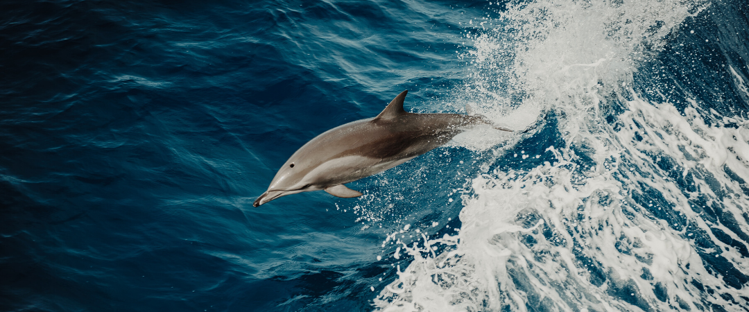A deadly dance in the waves: Defending dolphins