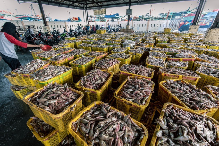 Co-op, Sainsbury's and Tesco sign EJF Charter for Transparency to end illegal fishing and slavery at sea