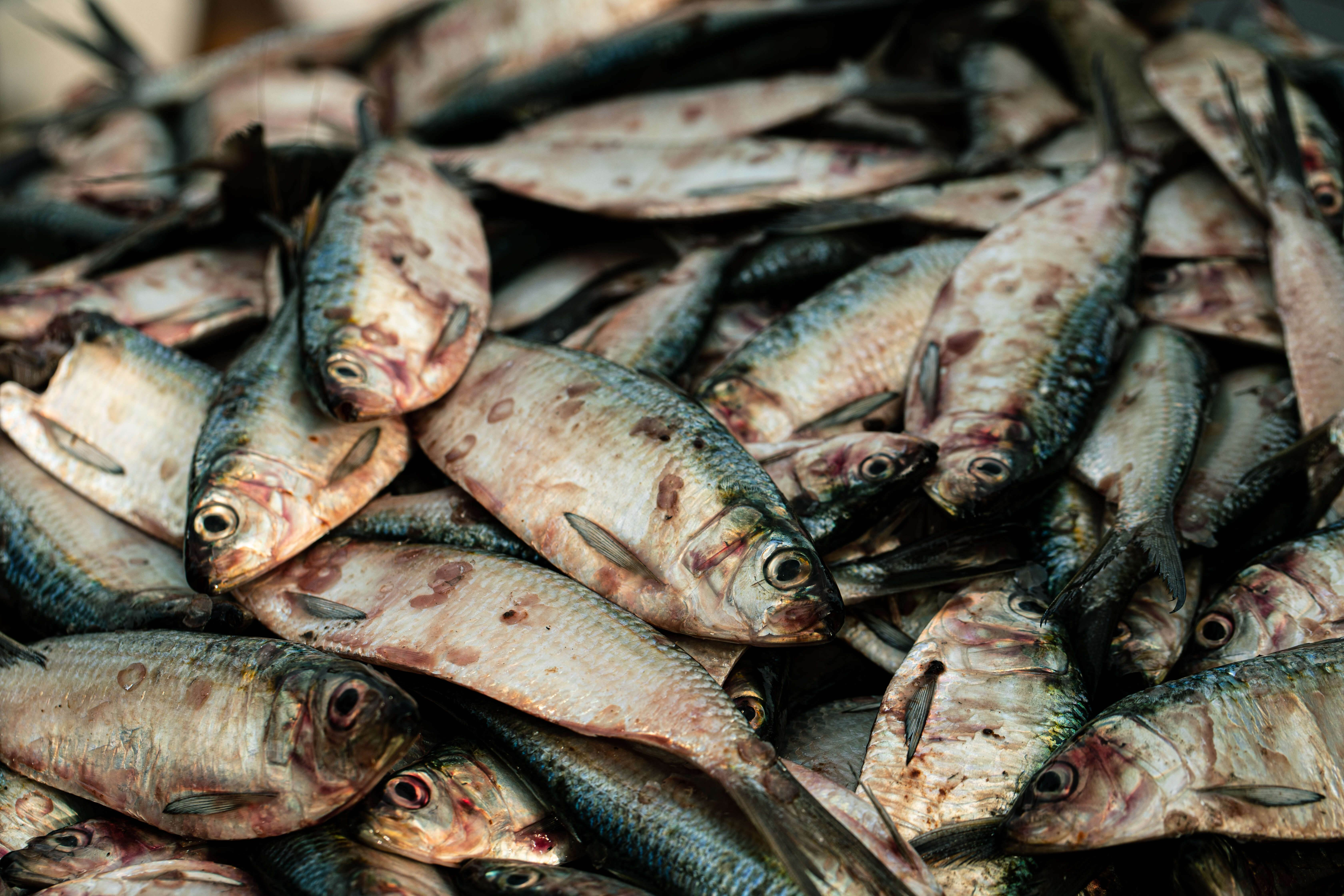 EU governments standing in the way of the fight to end secrecy around (over)fishing, say NGOs