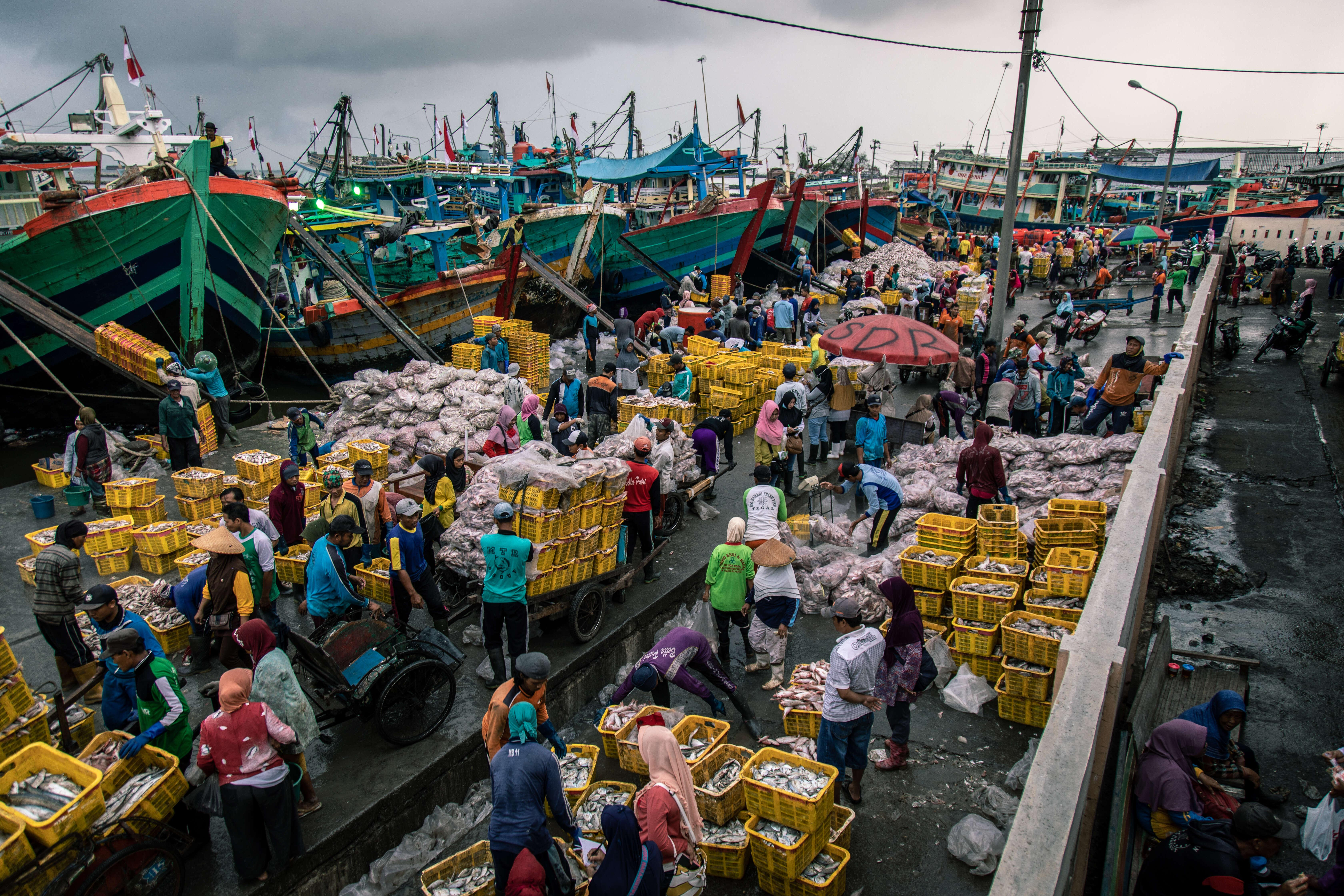 Free due diligence toolkit to help buyers of legal, ethical seafood