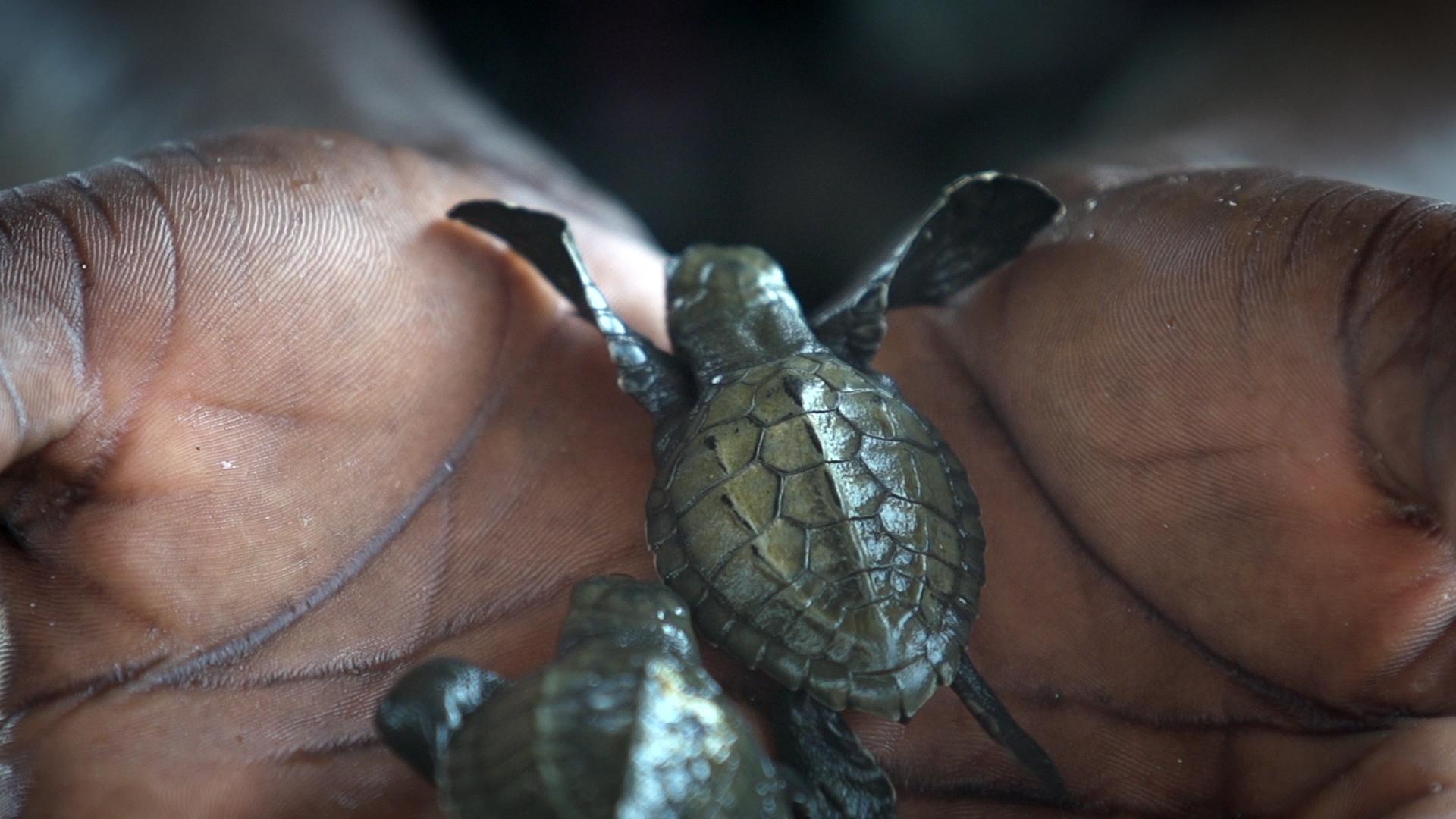 Ghanas Schildkröten-Patrouille