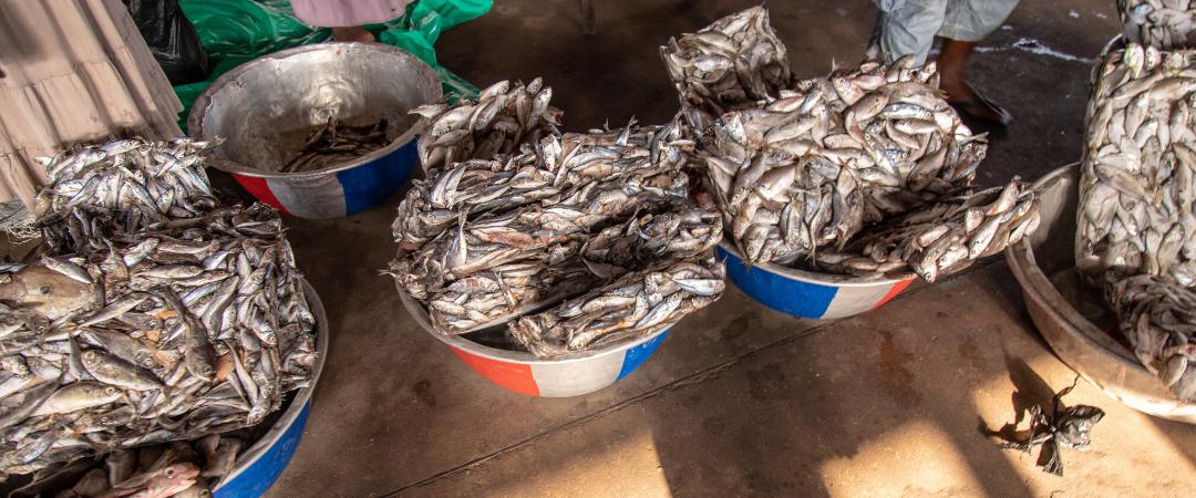 Ghana: Illegale Saiko-Fischerei geht weiter – trotz Zusicherungen der Regierung