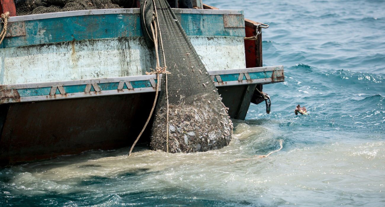 Illegale Fischereiprodukte in der EU: Was Deutschland tun kann