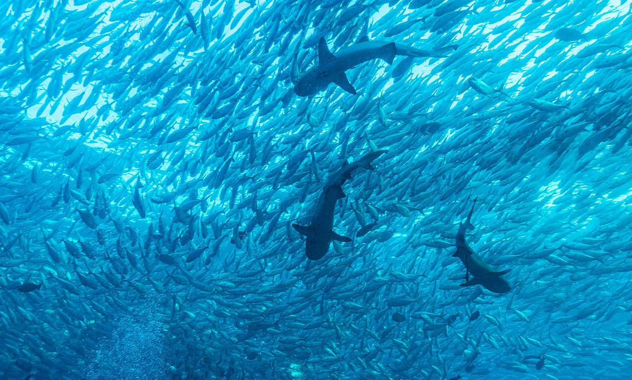 With global action, we can create sustainable, legal and ethical fisheries