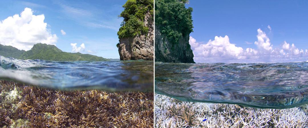 Korallen in Gefahr: EJF-Bericht zeigt Folgen der Klimakrise auf Riffe