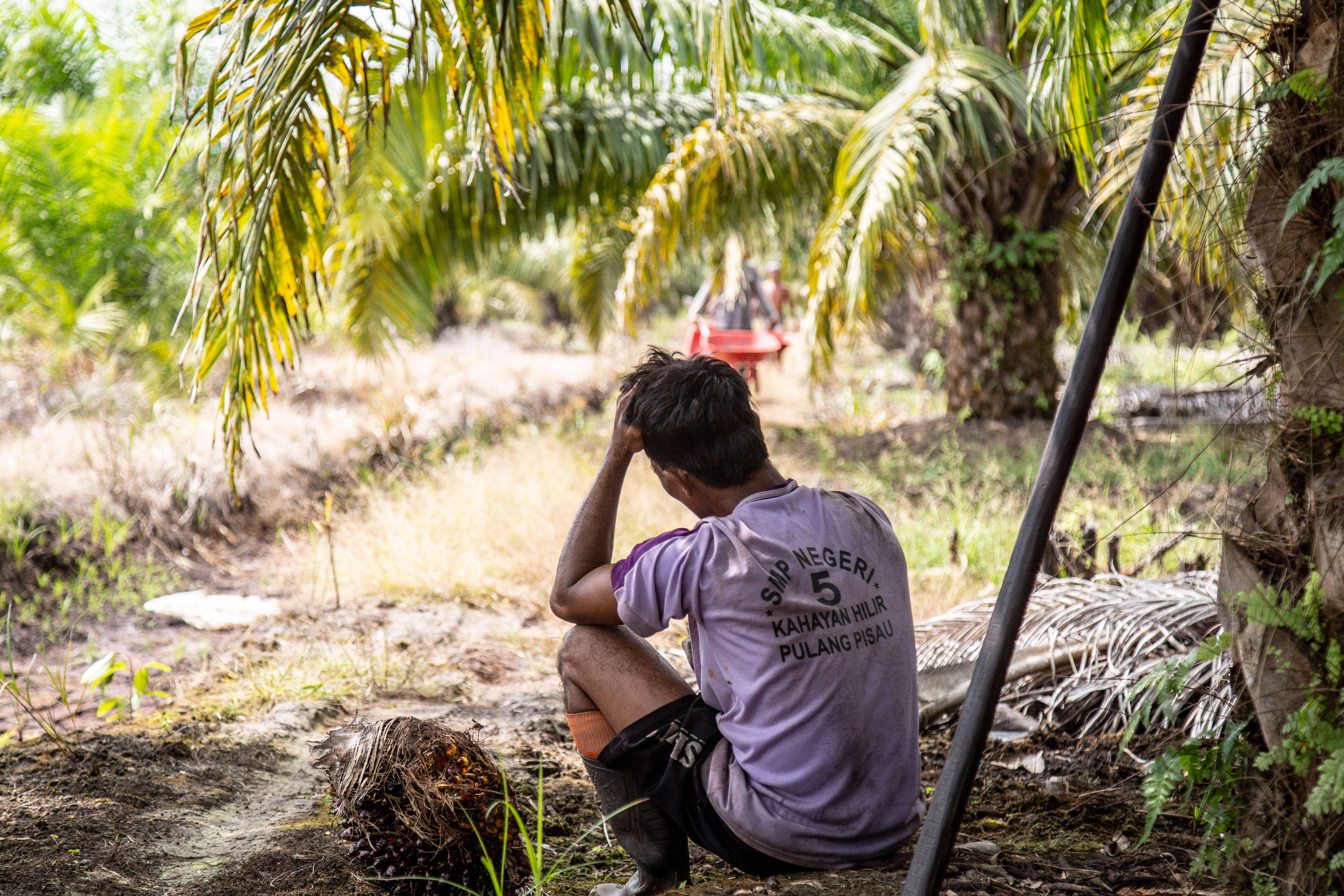 EU Parliament must vote to end human rights and environmental abuse in supply chains