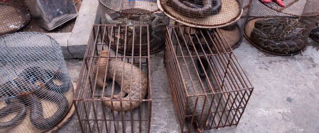To prevent the next pandemic ban commercial wildlife markets: new report