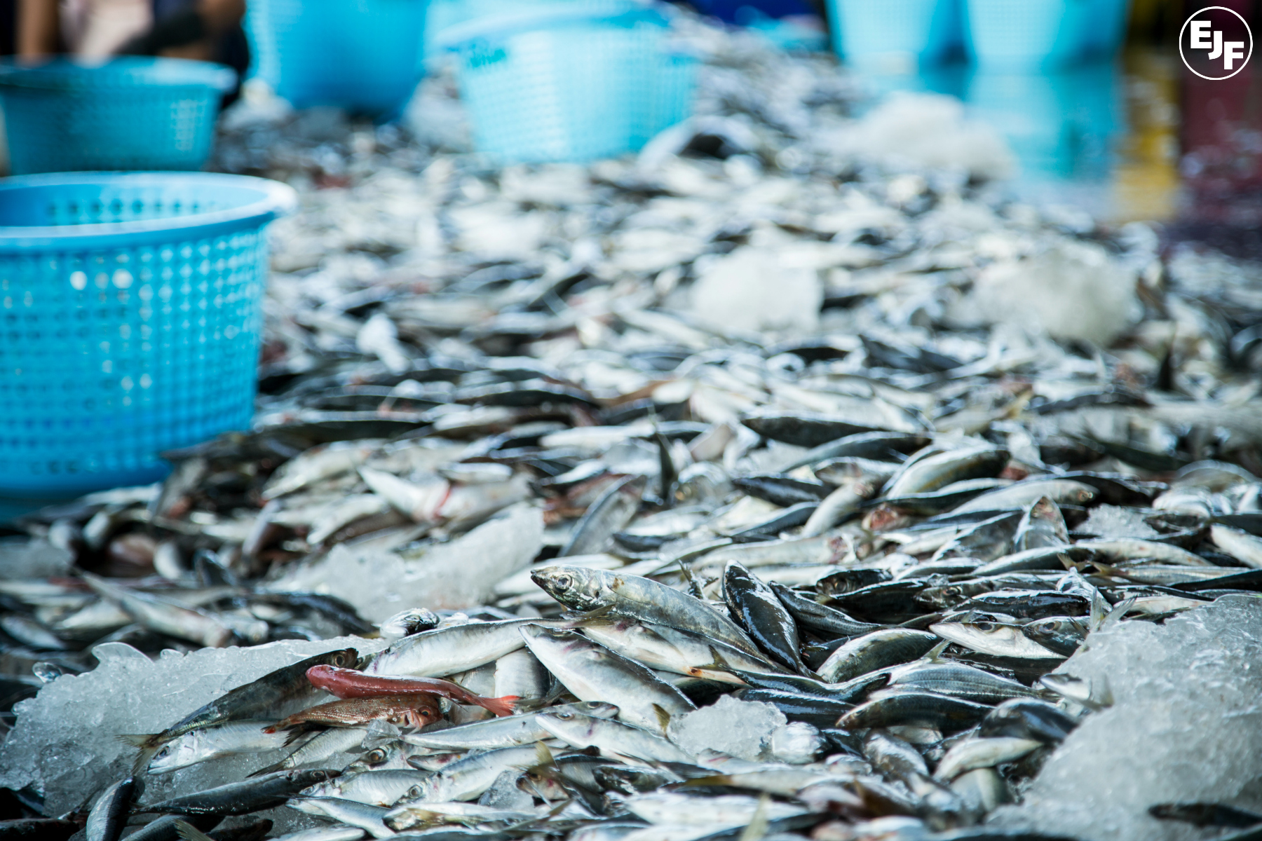 EJF: New international treaty is serious blow to pirate fishing