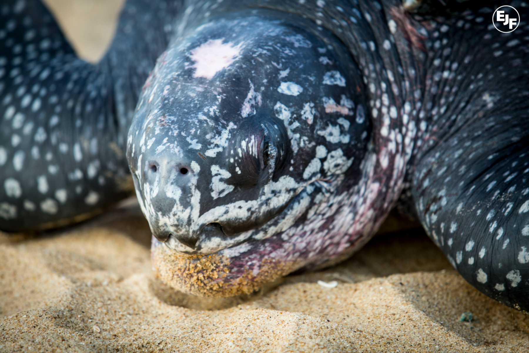 Notes from the field: turtle conservation up close