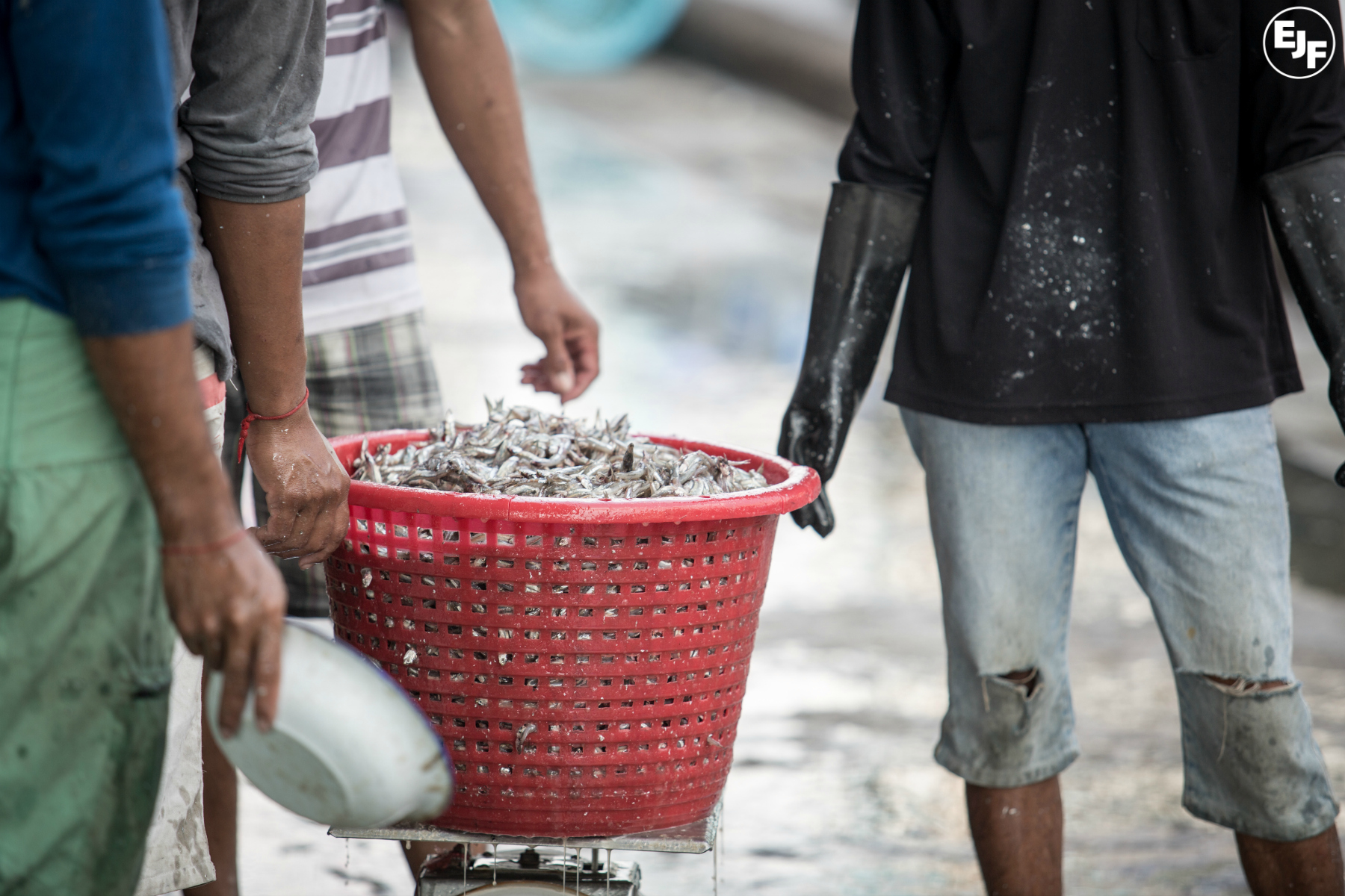 Slavery in the seafood supply chain: what can we do about it? - EVENT