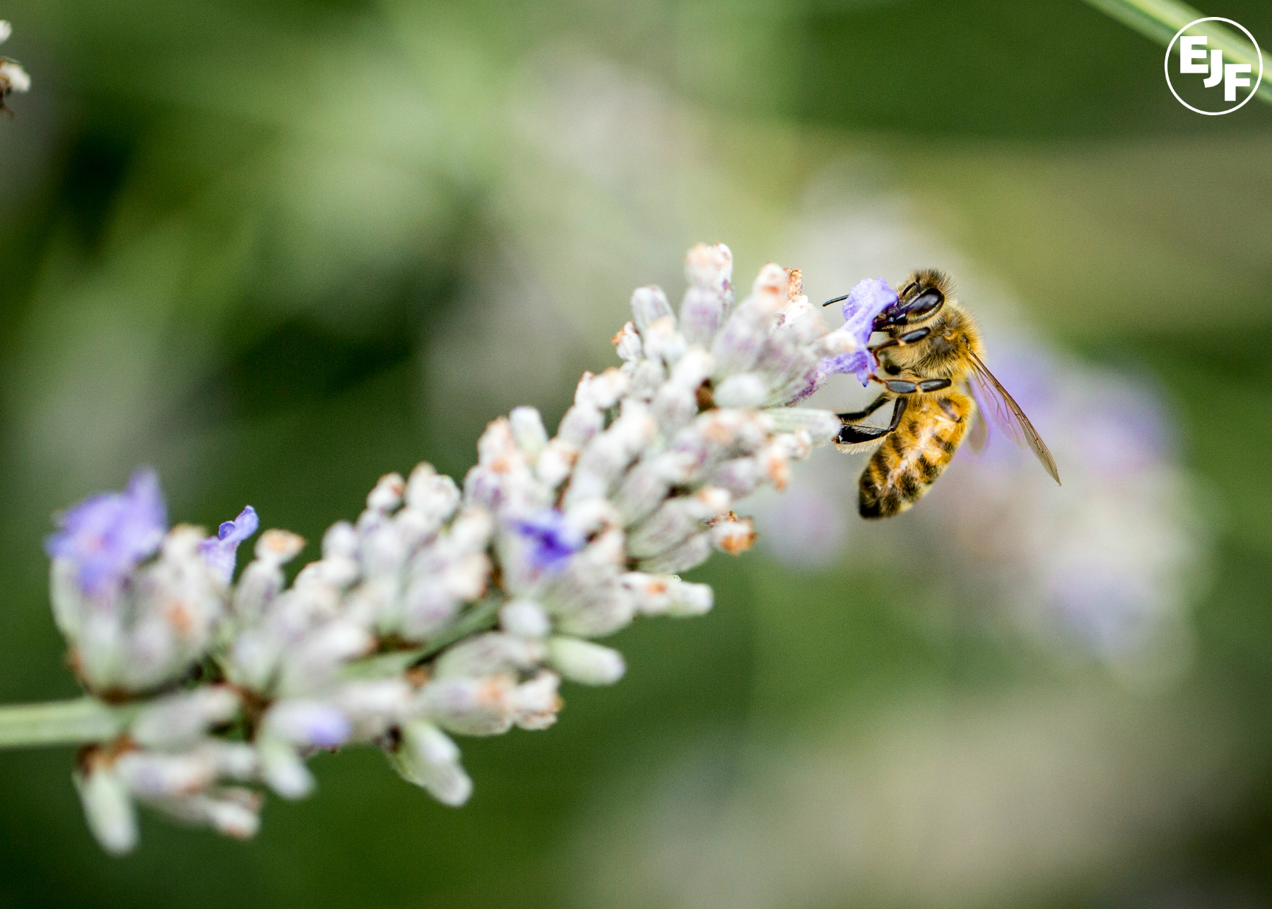 NFU attempt to dodge pesticides ban: Bee Coalition reaction