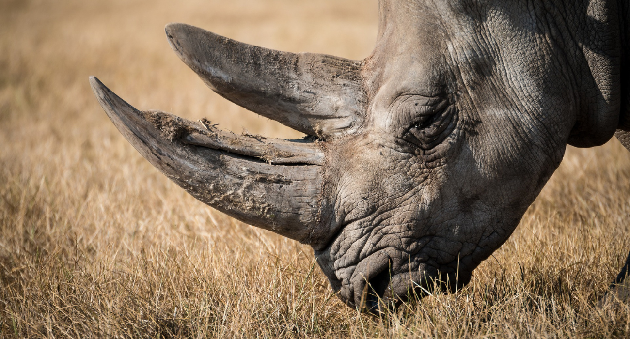 Tackle wildlife declines to safeguard all life on Earth – including us