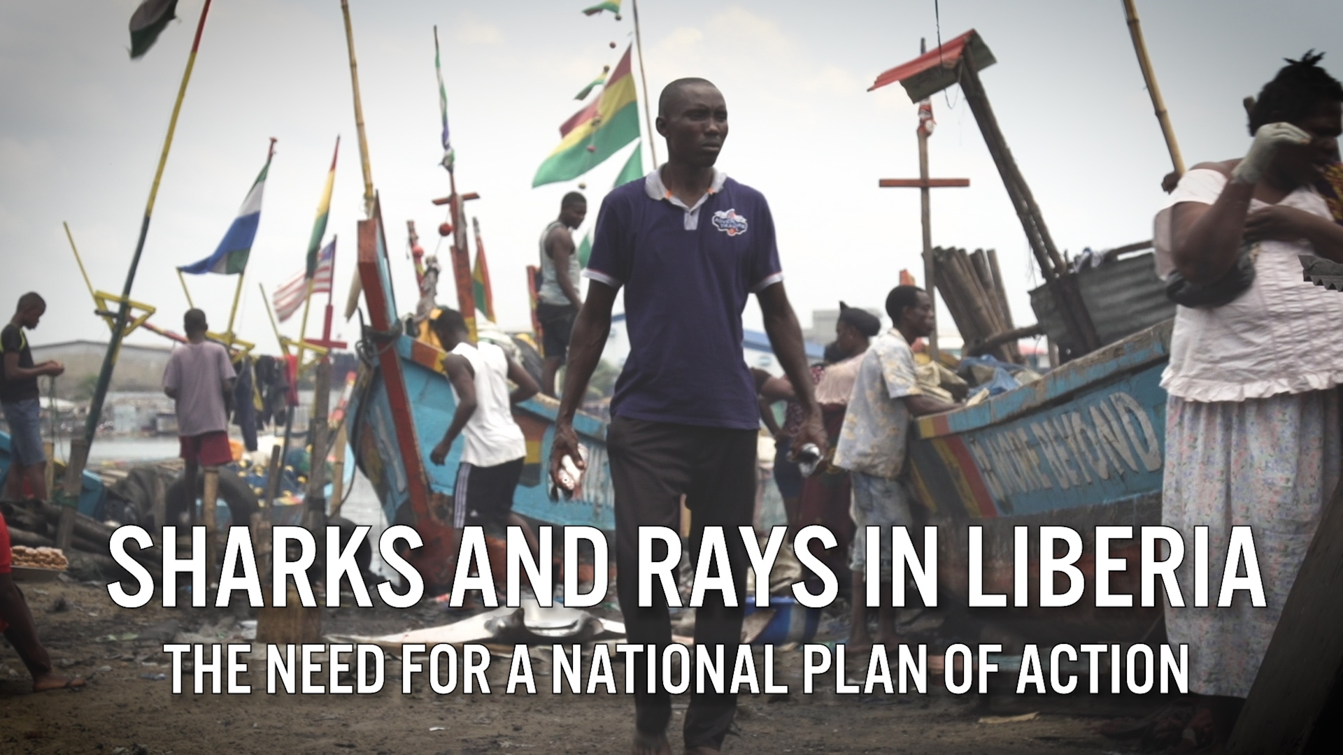 Sharks and Rays in Liberia: the Need for a National Plan of Action
