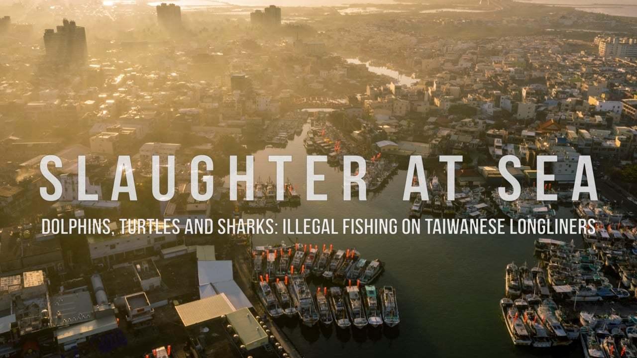 Slaughter At Sea | Grausame Fischerei-Praktiken auf See