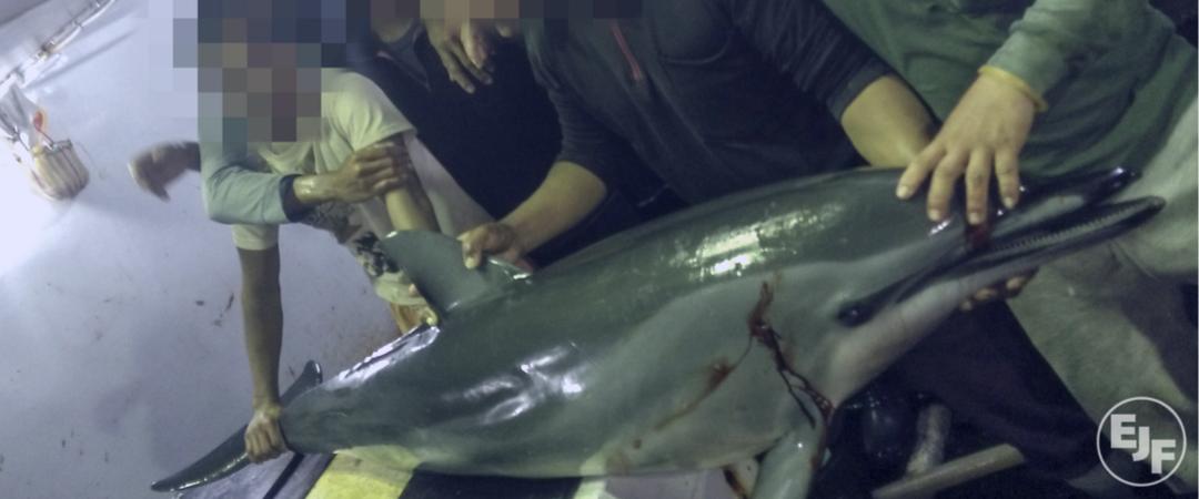 Taiwan: Grausame Fischerei-Praktiken aufgedeckt