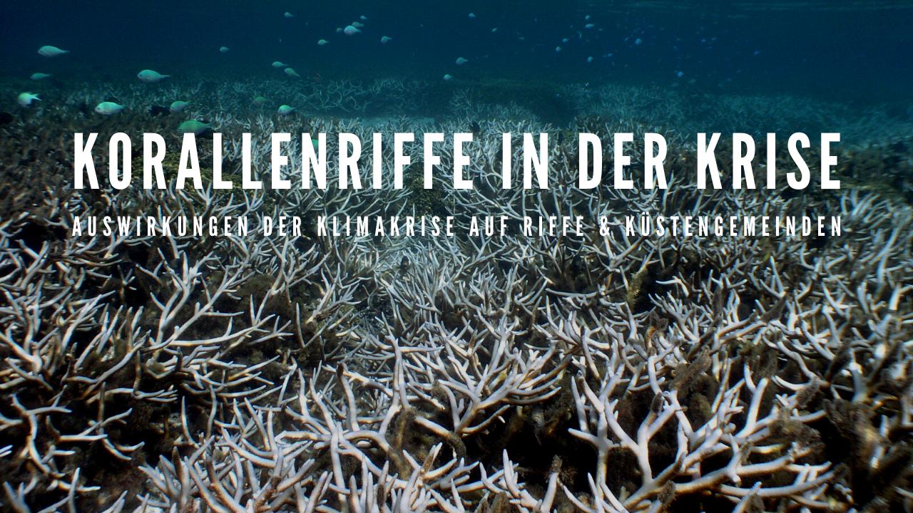 Korallenriffe in der Krise | Folgen der Klimakrise für Riffe & Küstengemeinden
